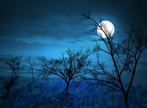 Full-Moon-Midnight-Forest-by-G-1250-8505-1379327822
